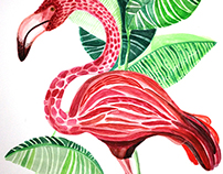 Flamingo / Flamenco