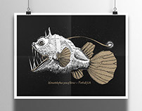 Himantolophus paucifilosus - Football fish