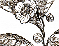 Flowers&Herbs Illustrations