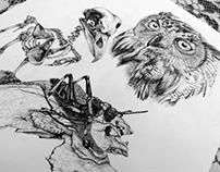Owl Study