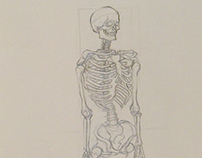 Skeletal Studies - 2014