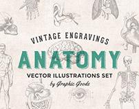 76 Vintage Anatomy Engravings