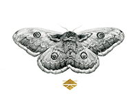 Perseverance - A Graphite Moth Illustration
