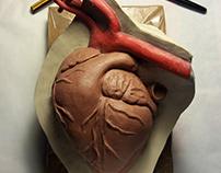 Realistic silicone heart