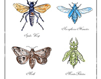 Spider Wasp, Moth, Necrophorus Humator beetle, Mantis