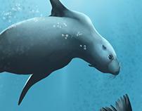 Foca Divers