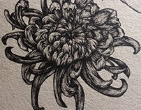 Chrysanthemum and Crane_ Sketch & Colored