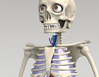RBA - El cuerpo humano