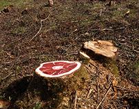 Tree ossobuko