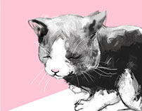 Pratt Cat