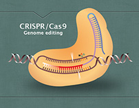 "illustration ""Plant genome engineering"""