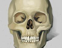 Skullstudie