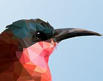 Polygonal Bird Study