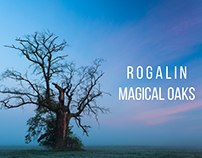 Magical Oaks