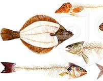 Fish... | Stuart Jackson-Carter