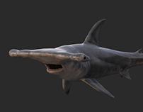 Hummerhead shark