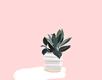 Potted Plants / Graphics / Vector