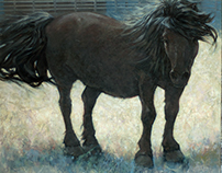 Horse Paintings and Sketches