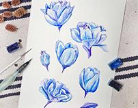 Blue Tulip Watercolor