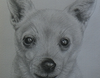 Pet Portraits by Kevin Geary