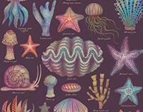 Sea Life Specimens