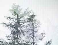 Sylvan~Alpina