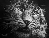 """""""Leopard"""" Material :Pencil on Paper 18X 24inch"""