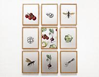 Commission Illustrations 2018: Food & Wine