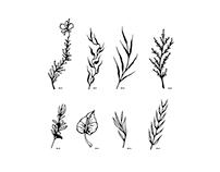 Herbal Patterns