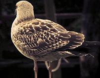 Uccelli di Venezia