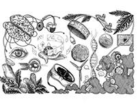 Chydenius mag illustrations