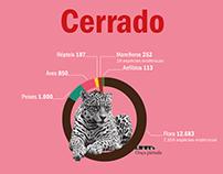Infográfico biodiversidade
