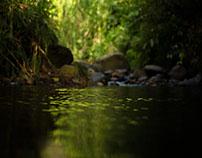 RIVER (Quebrada Buenavista)