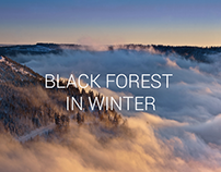 Photography - Black forest in winter