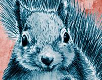 Squirrel's soft toys