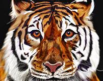 Illustration: Tiger