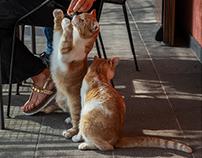 gatti umbri