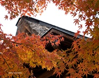 RED LEAVES OF SUIZENJI PARK IN KUMAMOTO CITY, JAPAN