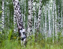Birch Grove - Bodypainting by Lana Chrtomium
