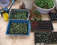 Lỗi khi trồng rau an toàn tại góc sân nhỏ