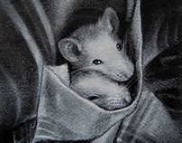 Rats In The Pocket