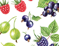 Watercolor illustrations for Lemonade