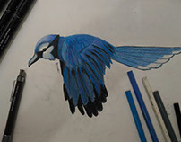 Blue Bird - freehand