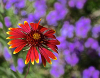 Phoenix Botanical Gardens Series