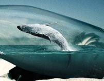 Whale in a Bottle
