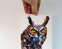 Mini portrait of the long eared owl