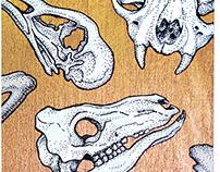 Animal Skulls 2015