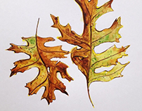Autumn leaves watercolor drawings