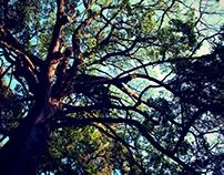 Tree Magic - Rincones Mágicos