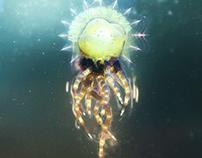Octopus Queen